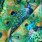 Vibrant Painted Peacock Printed Velvet - Curtains Soft Furnishing Fabric - Blue Green